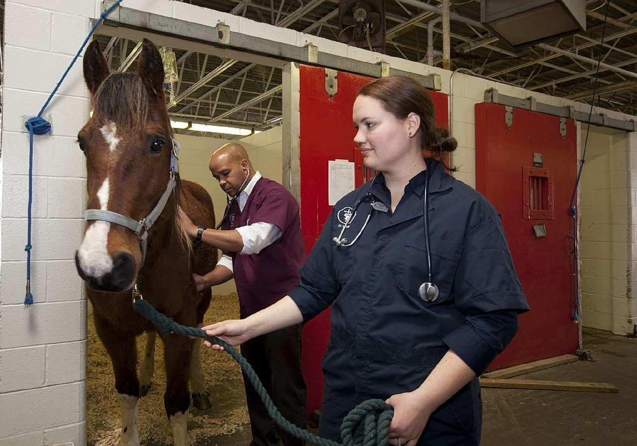 What is the Role of a Veterinarian?